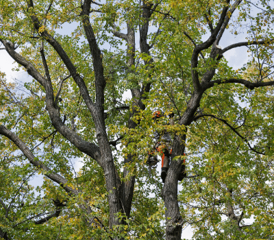 tree trimming & clearing in Iowa